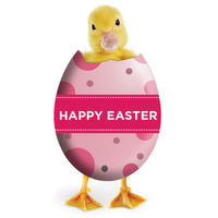 Easter-egg-with-chick